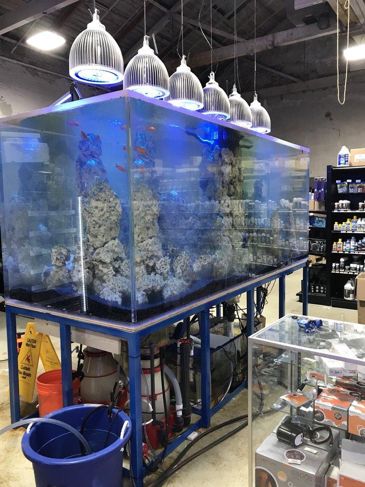 Bay Bridge Aquarium Pet Debuts In East Oakland