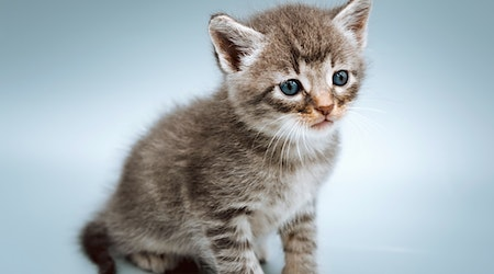 These Tulsa-based kittens are up for adoption and in need of a good home