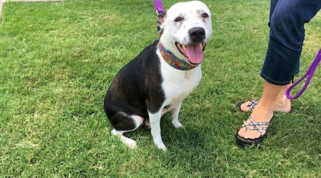Want to adopt a pet? Here are 7 cuddly canines to adopt now in Oklahoma City
