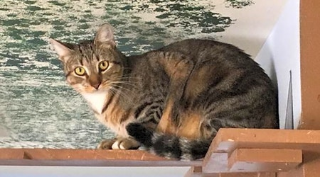 5 cute kitties to adopt now in Corpus Christi