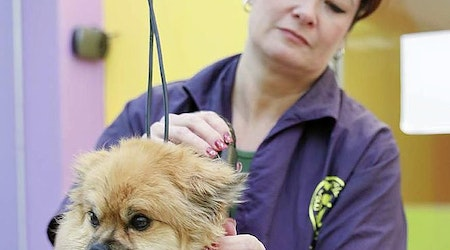 The 5 best pet stores in Colorado Springs