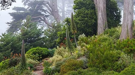 SF Botanical Garden reassures public after Reddit post causes panic over rare plants' fate