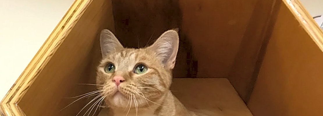 These Colorado Springs-based cats are up for adoption and in need of a good home