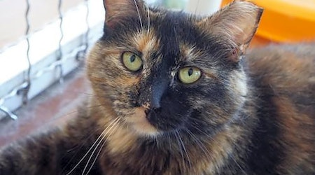 6 lovable kitties to adopt now in Tucson