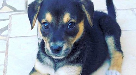 These San Diego-based puppies are up for adoption and in need of a good home