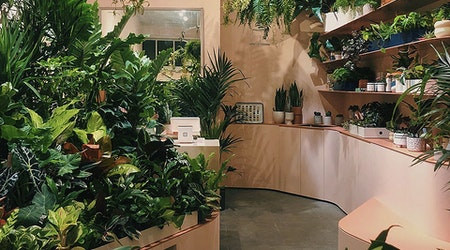 Plants and Friends grows a new branch on Fillmore Street