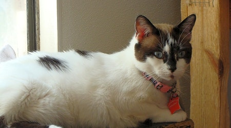 Looking to adopt a pet? Here are 3 cool kitties to adopt now in El Paso