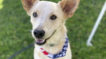 6 lovable pups to adopt now in San Diego