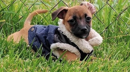 Looking to adopt a pet? Here are 6 precious puppies to adopt now in New Orleans