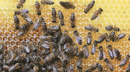 Top Tampa news: Toddler dies after being left in car; thousands of honey bees escape, sting; more