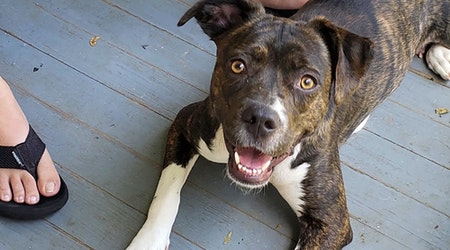 These New Orleans-based canines are up for adoption and in need of a good home