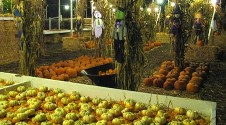 Signs Of Fall: Pumpkin Patch Open For The Season