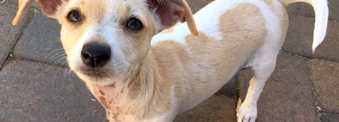 7 playful pups up for adoption in San Diego