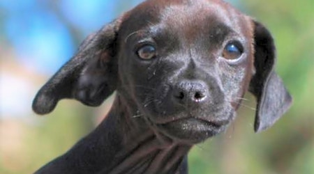 6 cuddly canines to adopt now in Tucson