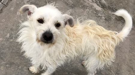 Looking to adopt a pet? Here are 3 cuddly canines to adopt now in El Paso