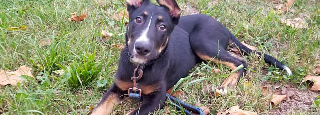 Want to adopt a pet? Here are 5 precious puppies to adopt now in Louisville