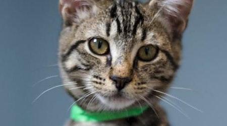 6 cute kitties to adopt now in Tucson
