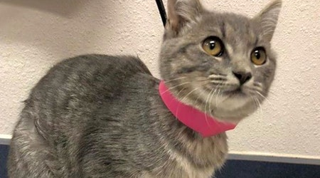 6 cute-as-can-be kittens to adopt now in El Paso