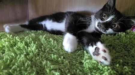 6 cuddly kittens to adopt now in Louisville