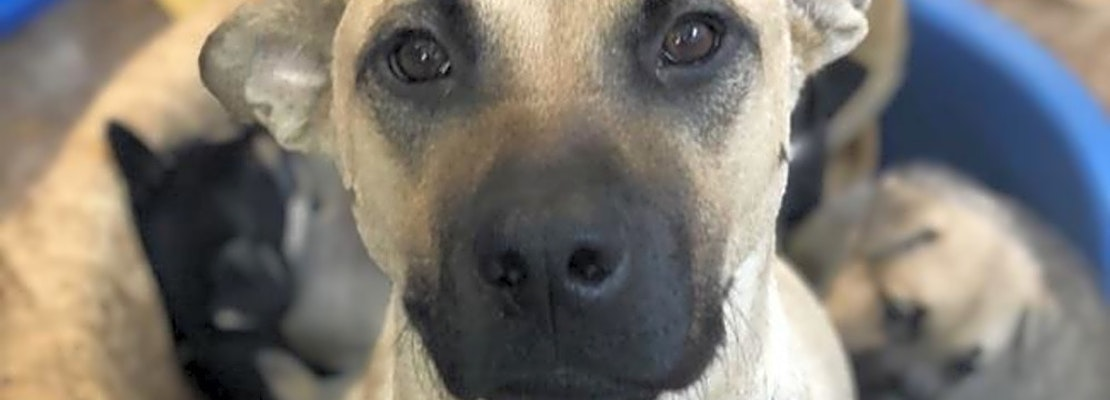 Lovable pups to adopt in San Diego