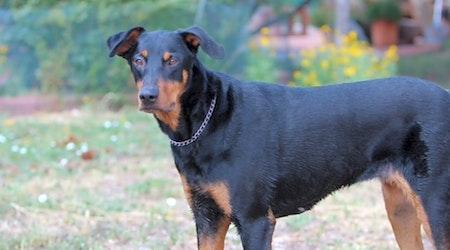 6 delightful doggies to adopt now in Albuquerque