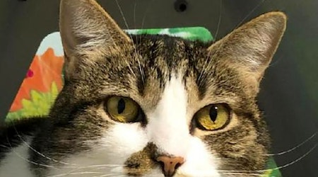 These Colorado Springs-based felines are up for adoption and in need of a good home