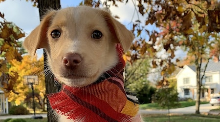 Cuddly canines up for adoption in Columbus