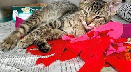 6 cute-as-can-be kittens to adopt now in Cincinnati