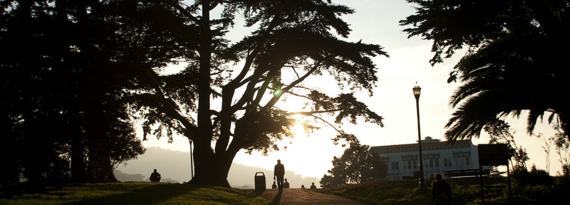 Meet Terry Williams, Dog Walker And Alamo Square Mainstay