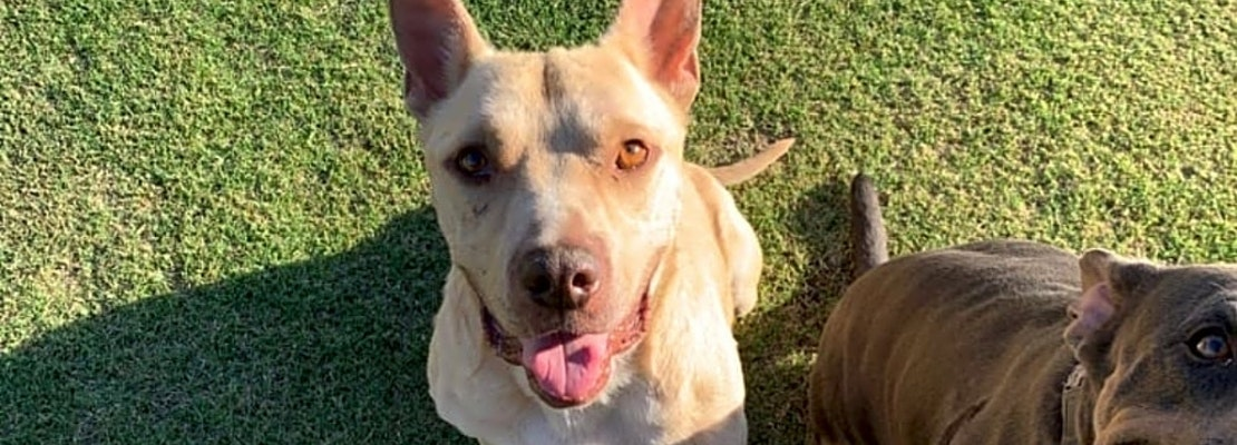 Want to adopt a pet? Here are 3 lovable pups to adopt now in Bakersfield