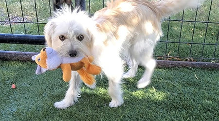 Want to adopt a pet? Here are 6 cuddly canines to adopt now in El Paso