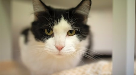 3 lovable cats to adopt in Columbus