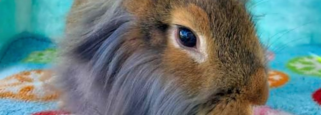 7 lovable rabbits to adopt in San Diego