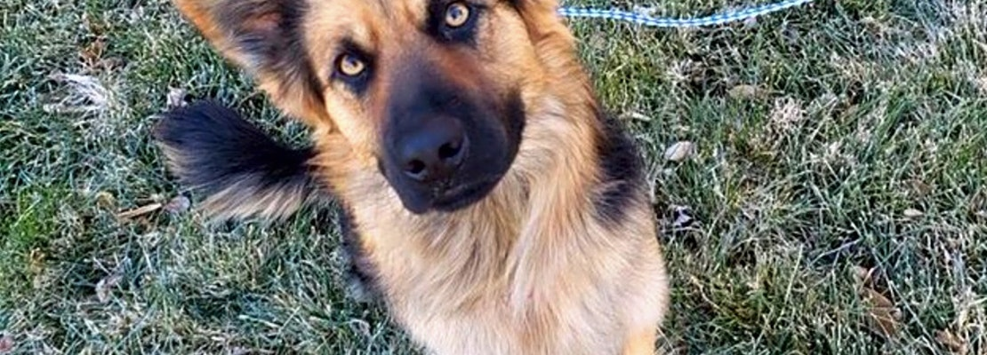 These Colorado Springs-based canines are up for adoption and in need of a good home