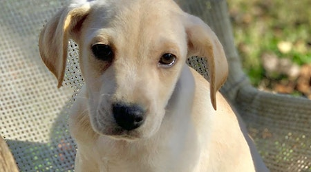 Want to adopt a pet? Here are 6 perfect puppies to adopt now in Cincinnati