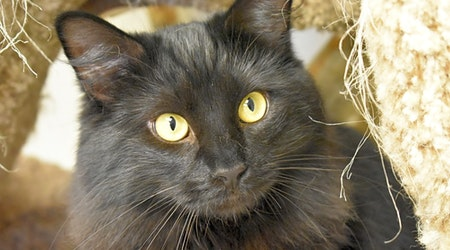 These Cincinnati-based cats are up for adoption and in need of a good home