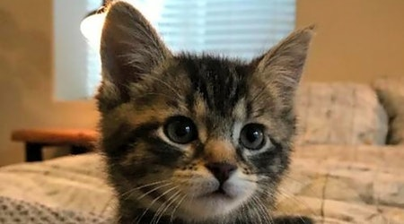 These Colorado Springs-based kittens are up for adoption and in need of a good home