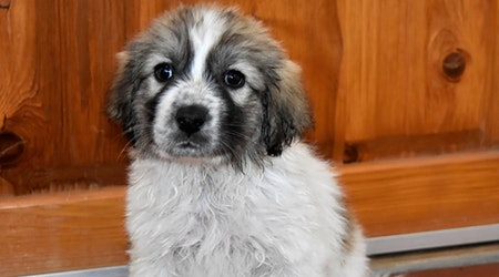 Want to adopt a pet? Here are 5 precious puppies to adopt now in Albuquerque