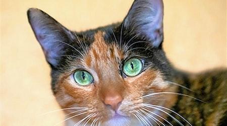 San Diego-based kitties seeking a good home