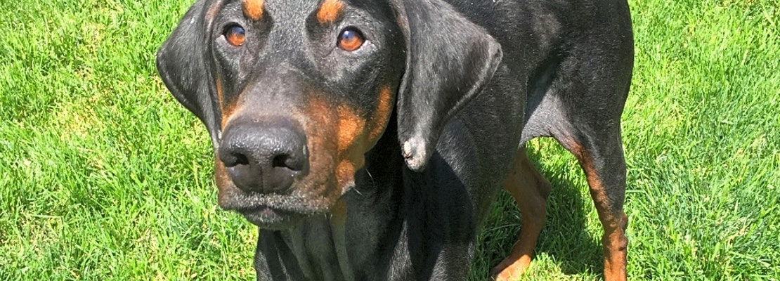 Want to adopt a pet? Here are 7 delightful doggies to adopt now in Louisville