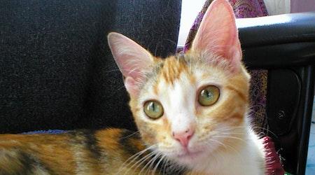 5 furry felines to adopt now in Austin
