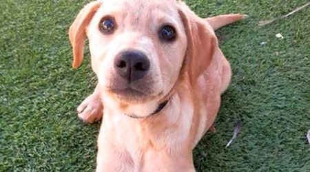 San Diego-based puppies up for adoption
