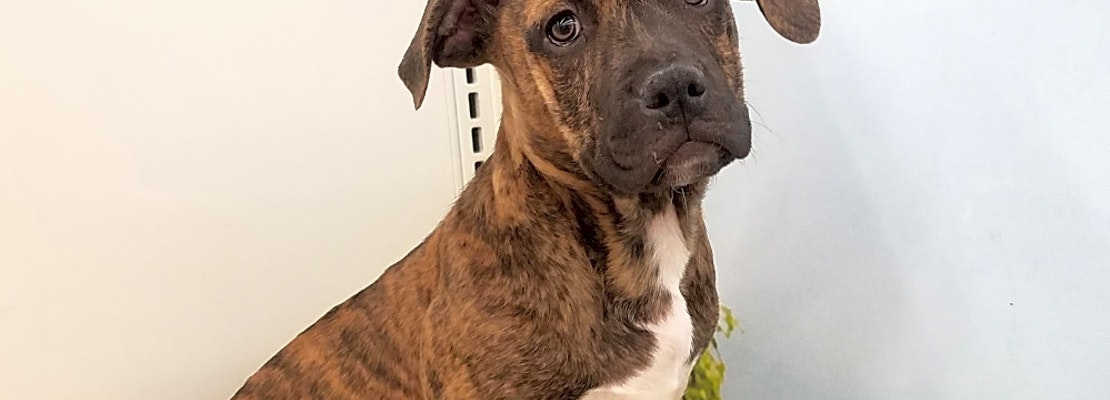 Want to adopt a pet? Here are 5 precious puppies to adopt now in Tucson
