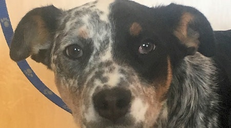 Looking to adopt a pet? Here are 7 precious puppies to adopt now in Colorado Springs