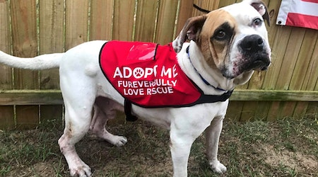Looking to adopt a pet? Here are 4 delightful doggies to adopt now in Orlando