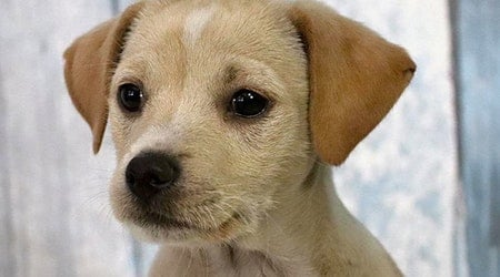 Cuddly canines to adopt now in Washington