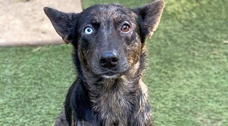 3 lovable pups to adopt now in Bakersfield