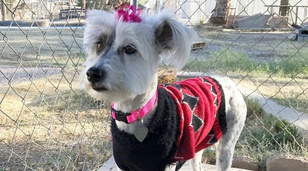 6 lovable pups to adopt now in El Paso