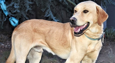 7 lovable pups to adopt now in Albuquerque
