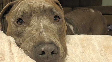 7 cuddly canines to adopt now in Columbus